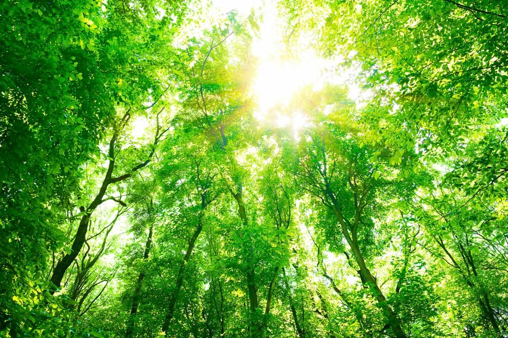 naturopathe Arras